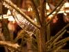 Rhythmicals auf dem Weihnachtsmarkt Esslingen 2010